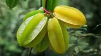 Carambola, also known as starfruit, also native to the Seychelles.