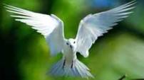 Seychelles seabird species white-tailed fairy tern.