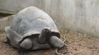 Hotel La Roussette Seychelles - Garden - Giant Tortoises