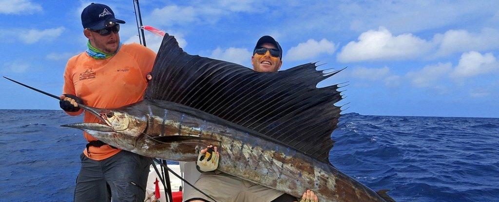 Fishing in Seychelles - Sailfish - Hotel La Roussette Seychelles