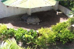 Hotel La Roussette Seychelles Giant Tortoise Pen