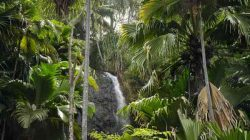 Coco de Mer forest